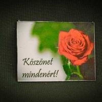 Köszönet-mindenért,-rózsás---lapka-hűtőmágnes